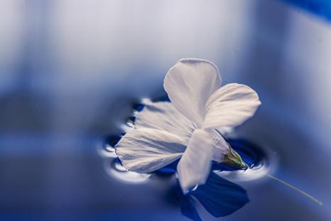 お葬式初めての方へ 説明イメージ(水面の白い花)